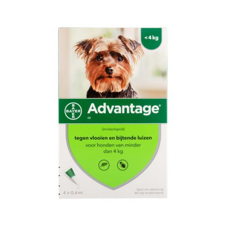 Advantage Hund - Pipetten gegen Flöhe