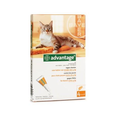Advantage Katze 40 x4